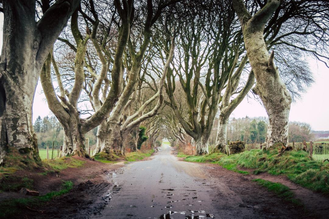 dark hedges Belfast