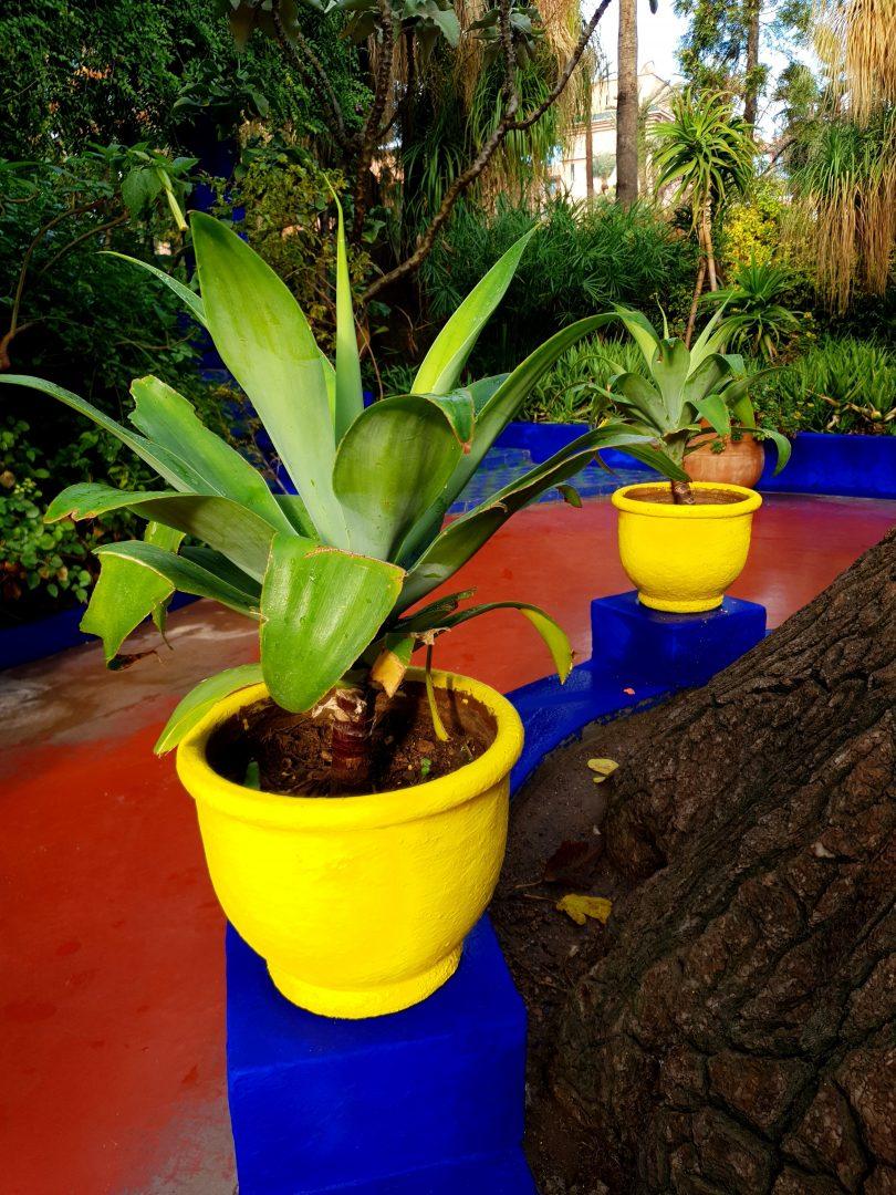 colourful Majorelle Gardens in Marrakech