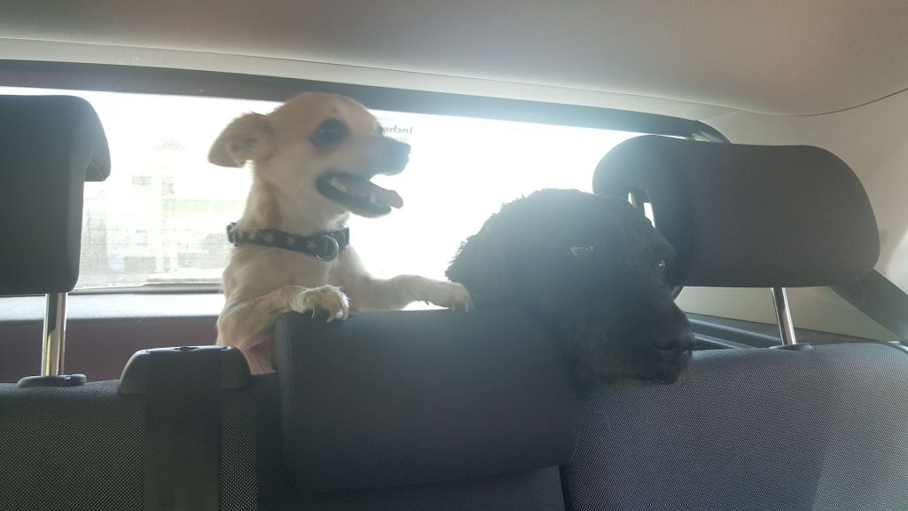 travel with dogs by car