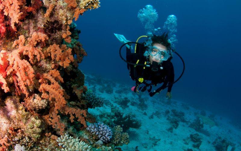 scuba diving florida keys