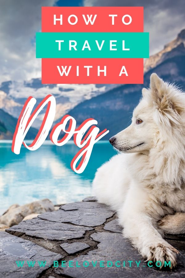 tips to travel with dog