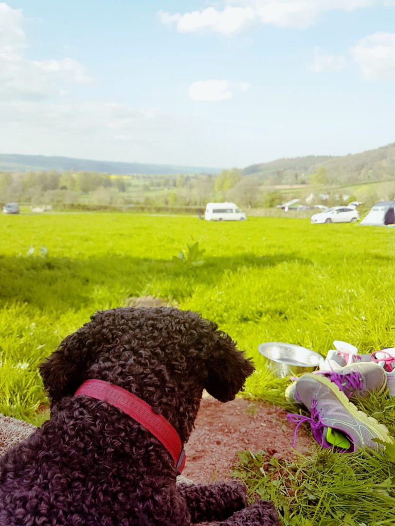 brecon beacons camping with dog