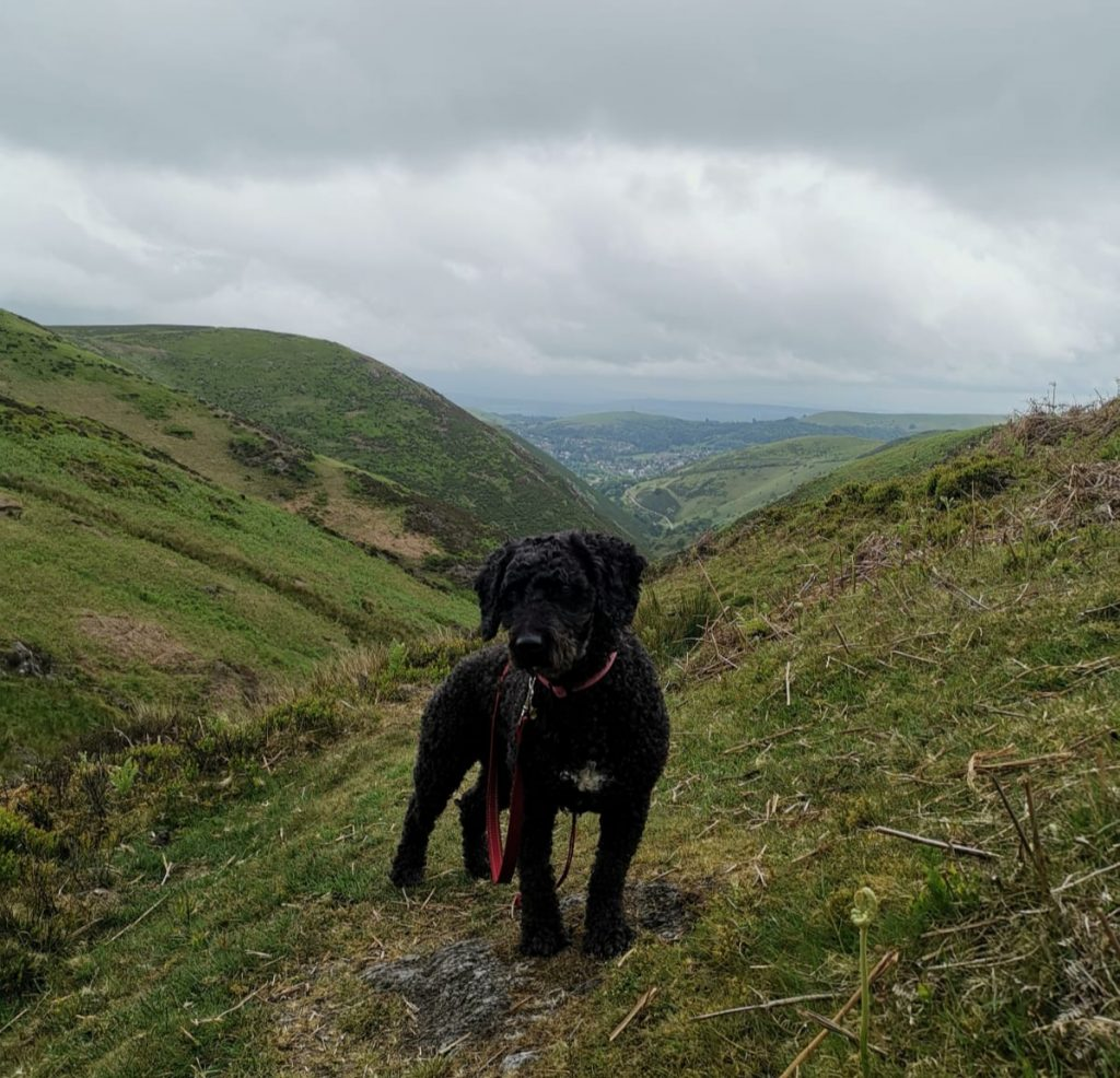 hiking with dog in Wales