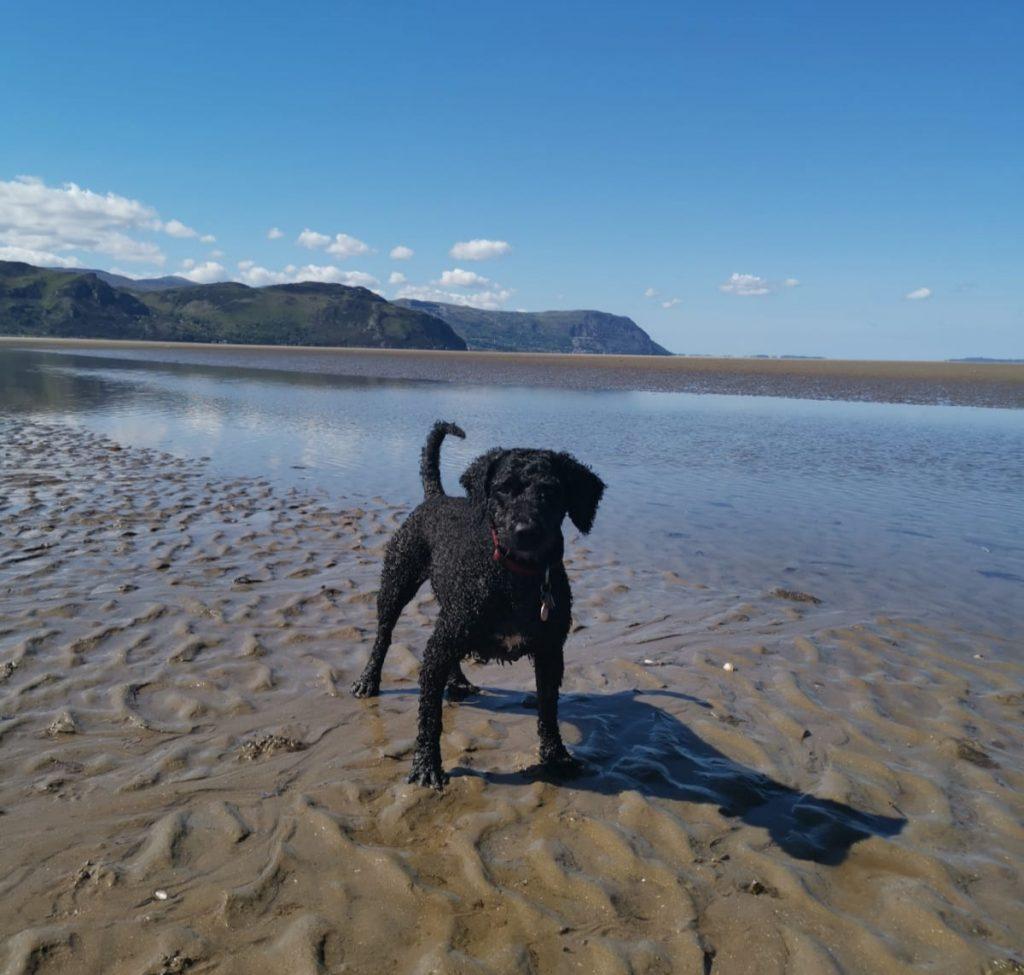 travel with dog beach