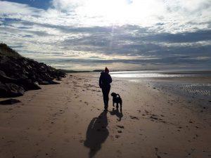 Spanish water dog on holiday