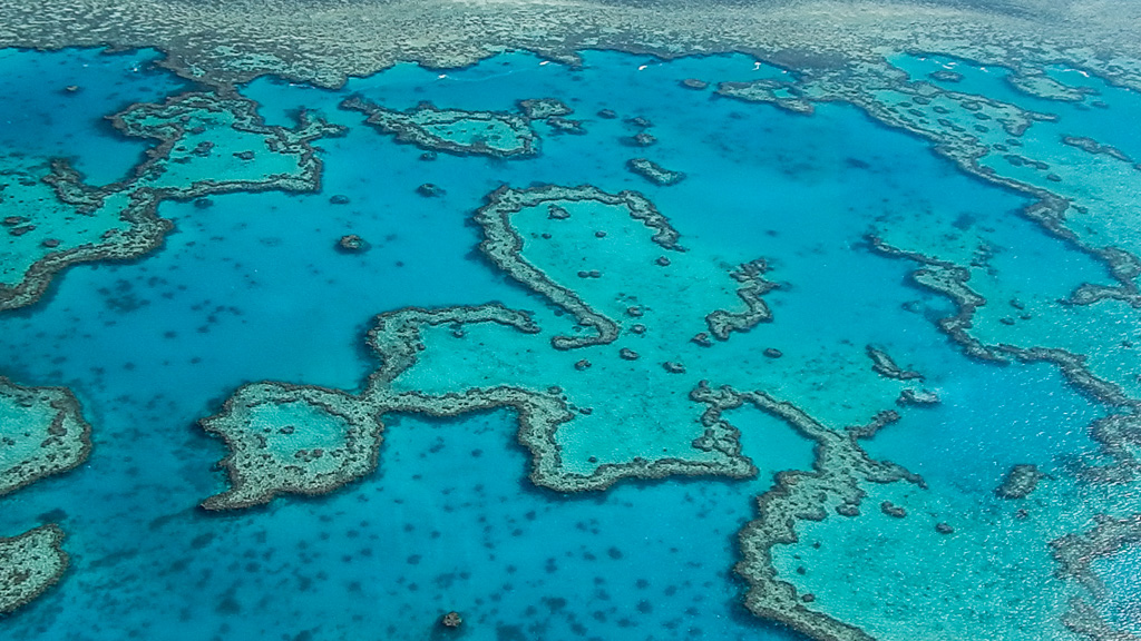 great barrier reef during scenic flight