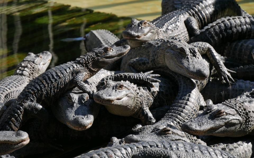 gatorland theme park florida