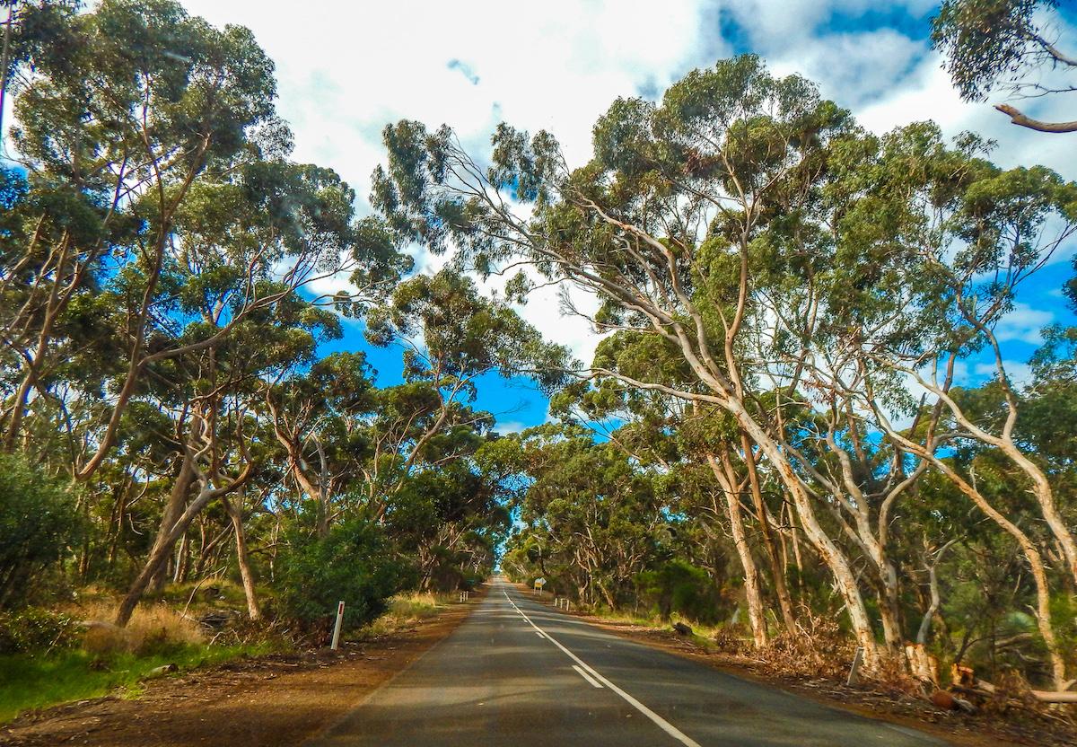 kangaroo island road to kingscote