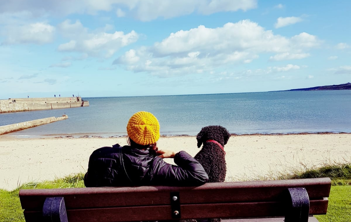 st andrews dog friendly activity