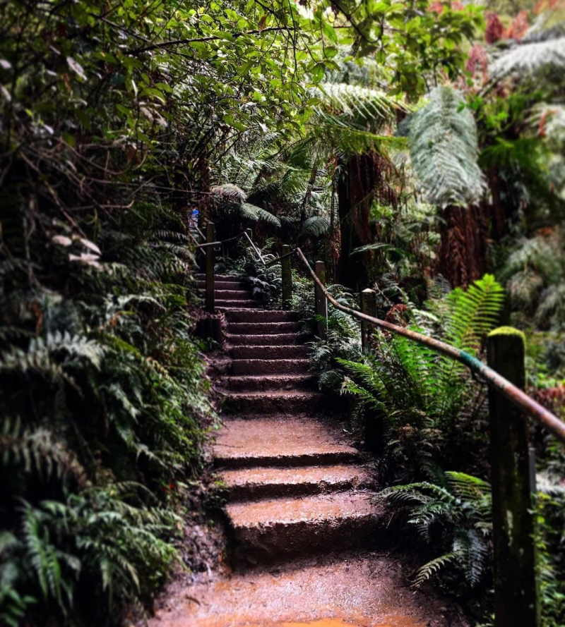 things to do dandenongs melbourne