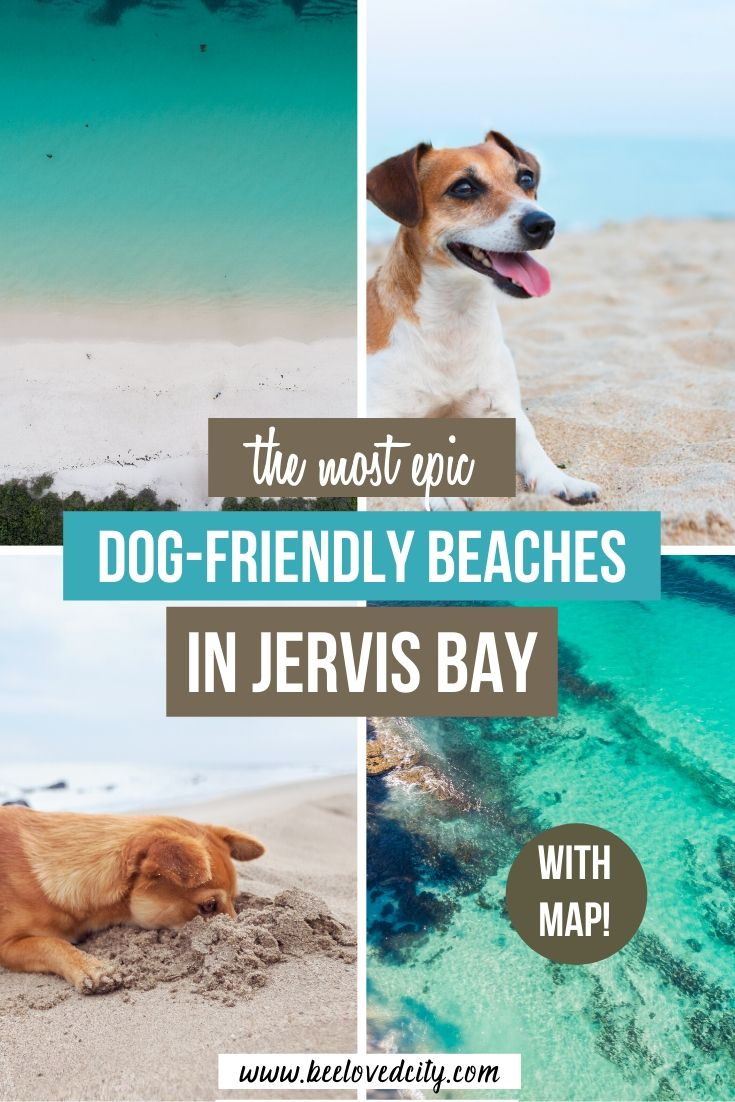 jervis bay australia dog friendly beach