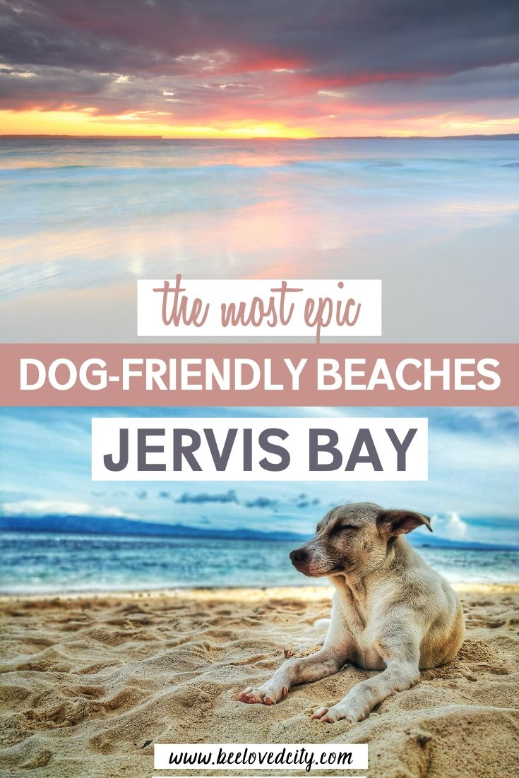 best beaches for dogs in jervis bay