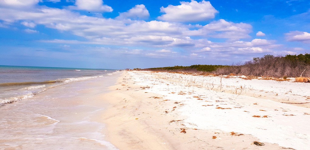best beach florida honeymoon island