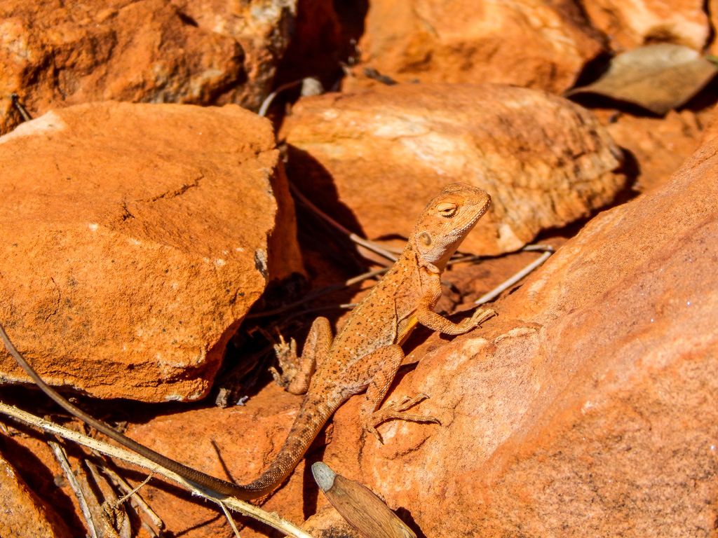 kings canyon wildlife