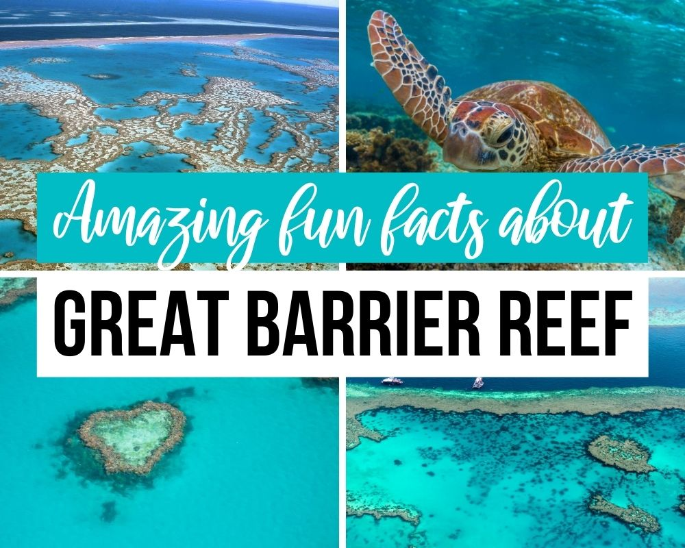 fun facts great barrier reef