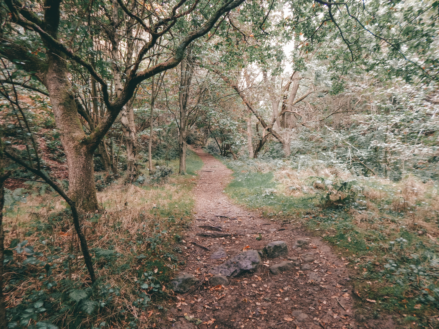 dalby forest walk in yorkshire