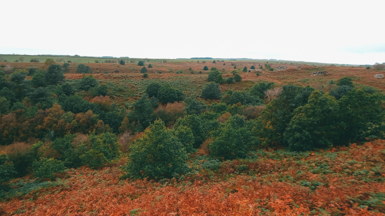 autumn walk in dalby forest