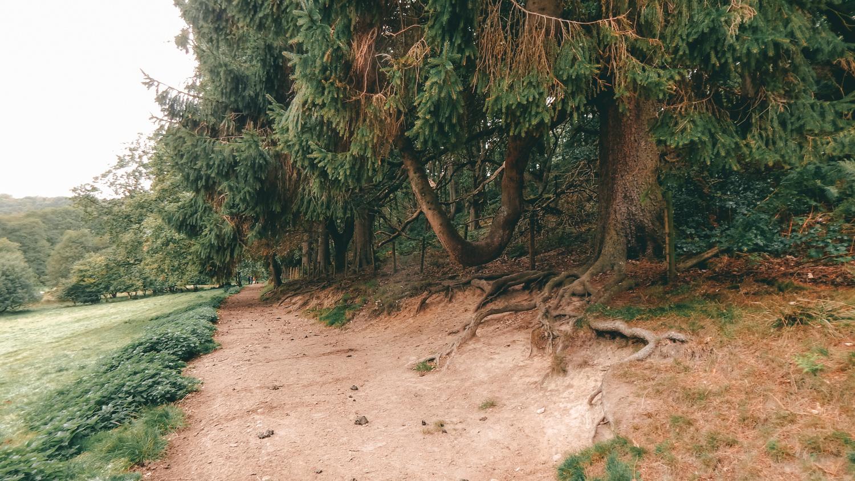 bridestones in dalby forest walk