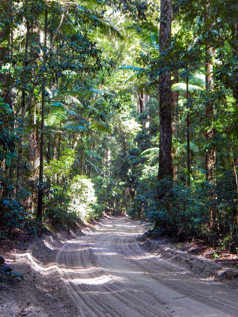 Rainforest on Fraser Island Queensland