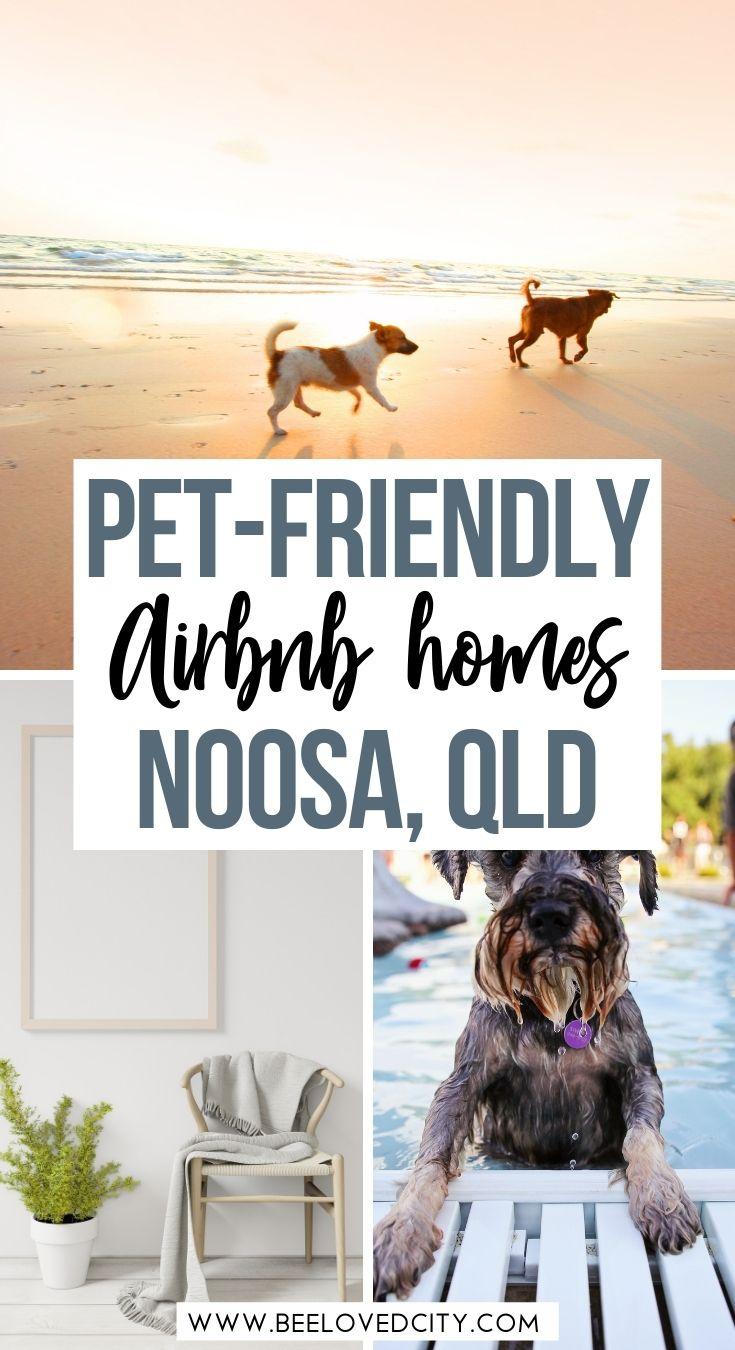 Best Airbnb Noosa pet friendly