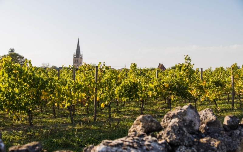 Saint-Emilion vineyards