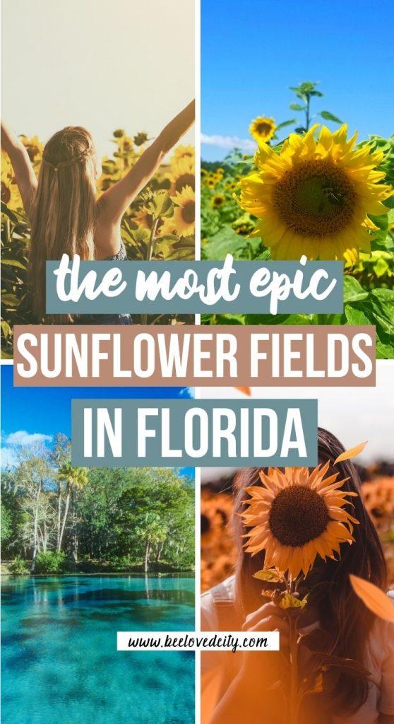 Best sunflower fields in Florida
