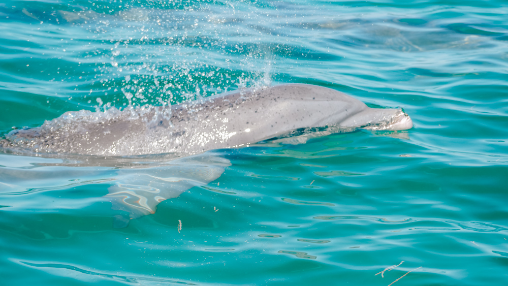 Dolphin cruise in Key West